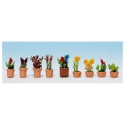 Plantes d'ornement en petits pots de fleurs