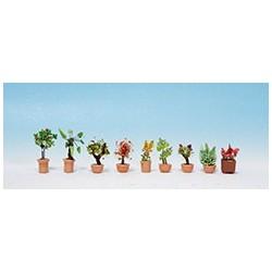 Plantes d'ornement en grands pots de fleurs